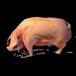 Pig Ceramics