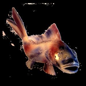 Fish Ceramics